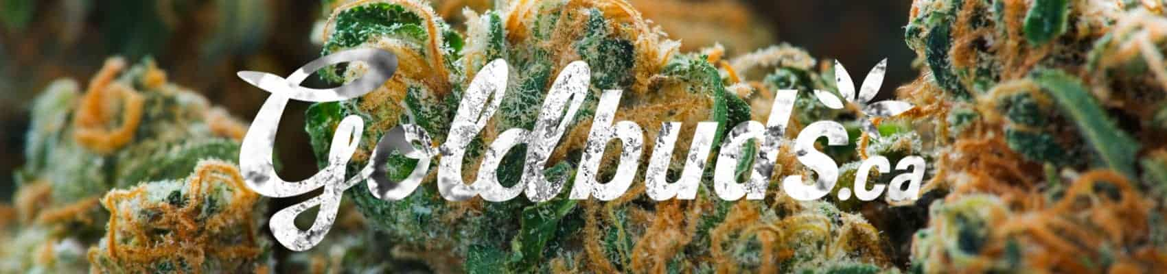 gold buds buy weed online canada