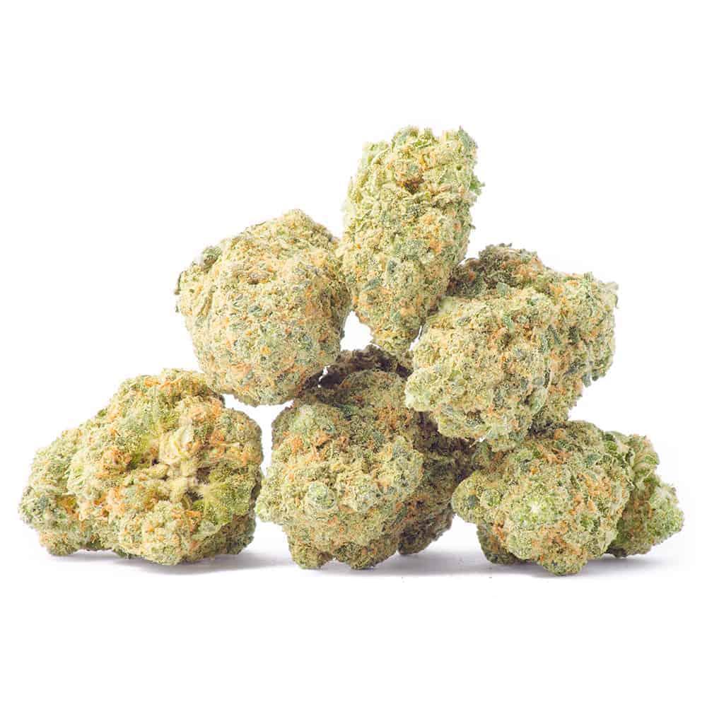hashplant strain image