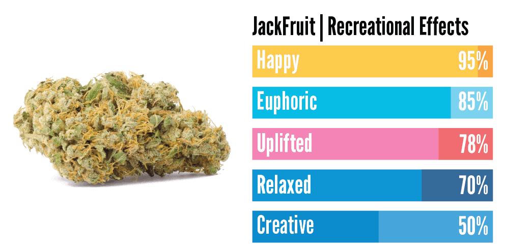 """""""Jack fruit hybrid weed effects"""""""