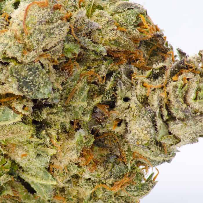 Close up shot of a fresh death bubba nug that showcases its purple features and orange hairs