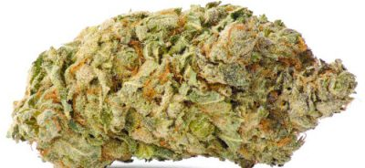 a picture of a fairly large death bubba nug with a white background
