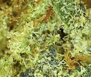 Buy marijuana buds online