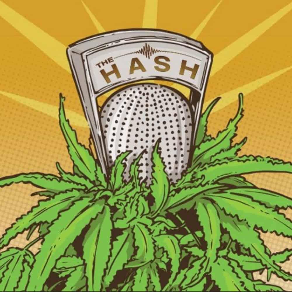 Hash vs weed photo