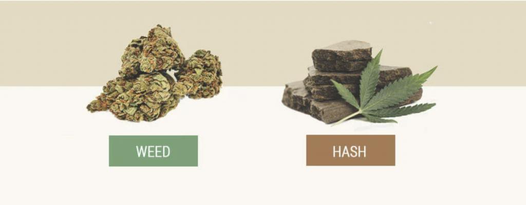 hash, weed, hash vs weed